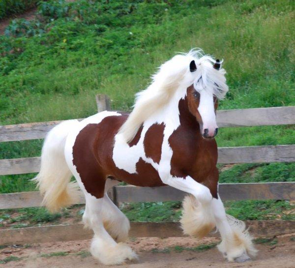 Splendide cheval