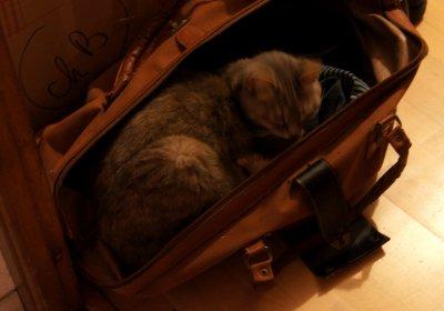 Le chat a déménagé sans souci
