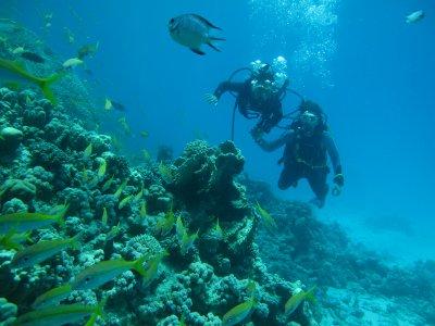 Kossal plongée Hurghada 29