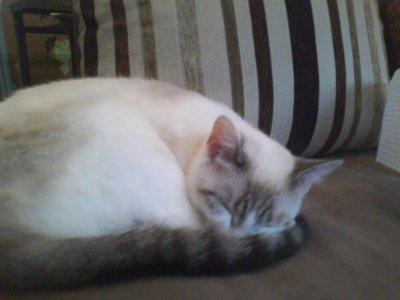 chat alors chat chez mon chat