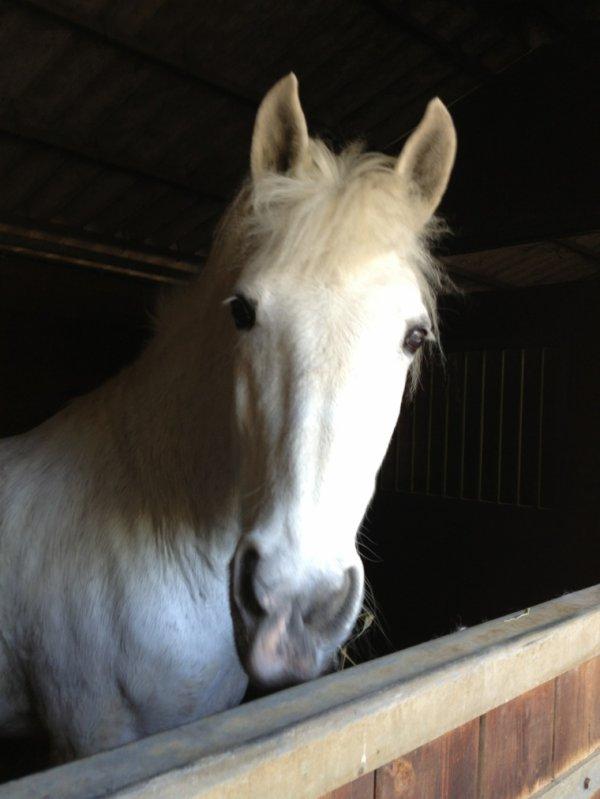 Flamenco mon cheval ?❤