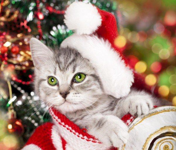 Bonjour et Bon Noel à vs ts les Ami(es),Bisous !!!