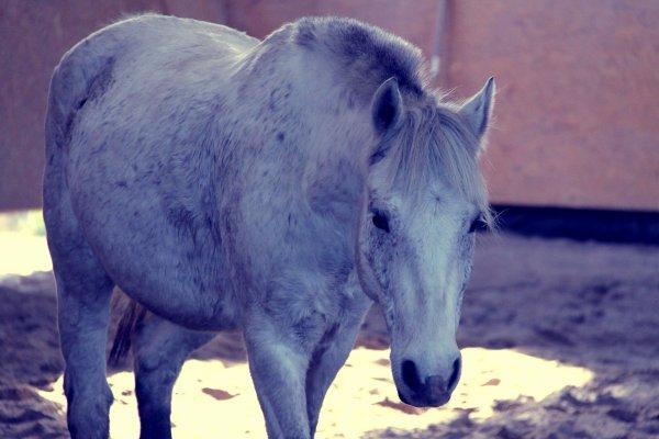Le respect du cheval, c'est la fondation de la liberté . ♥