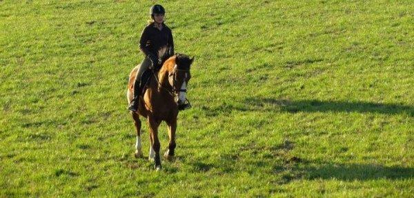 ❆ Dès le moment où mon cheval veut me suivre pour aller là où je vais, je peux commencer son éducation, pas une seconde avant.❆