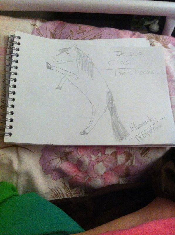 Dessin cheval merdique