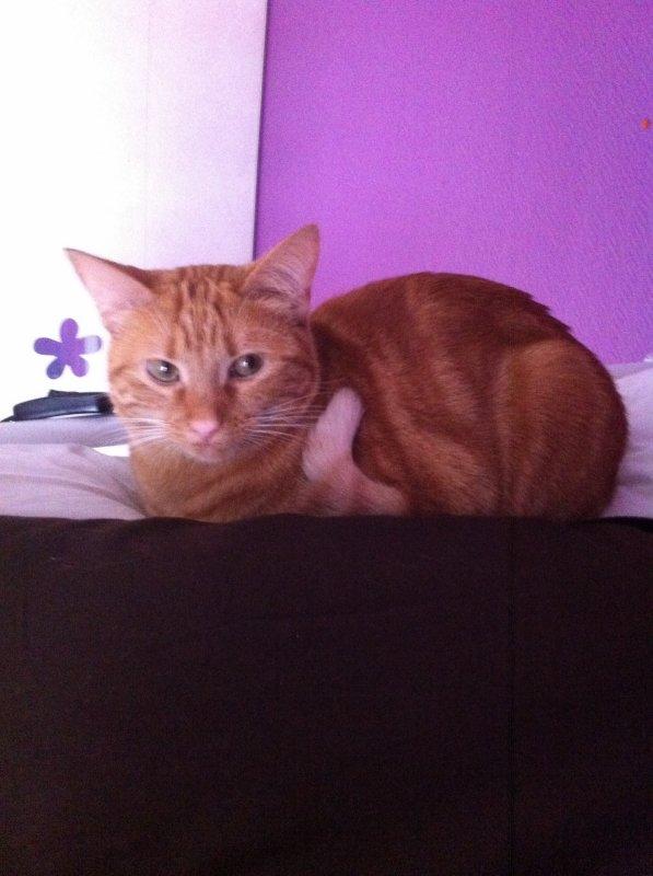 Mon chat , Ma Praline