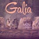 Photo de galia-creations