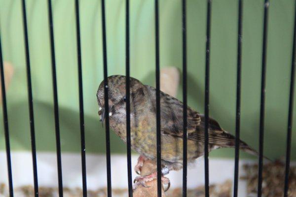 Les oiseaux exposés