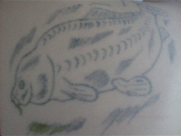 nouvelle foto de mon tatou