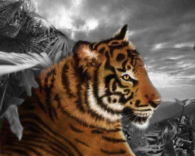 un tigre ca fesai longtemps
