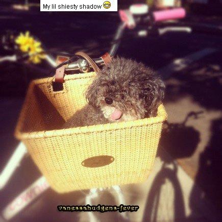 Ce Lundi 02 Juillet 2012::: Vanessa et Austin étaient à l'anniversaire de Ashley Tisdale à Malibu (+) Photo personnelle