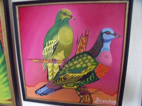 pigeons de madagascar