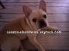 kkkkkkkkkkkkkkkkkkkkkkkkkkkkkkkkkkkkkkkkkkkkkkkkkkkkkkkkkkkkkkkkkkkkkkkkkkkkkkkkkkkkkkkkkkkkkkkkkkkkkkkkkkkkkkkkEXCLUSIVITÉ  : Voici en exclu' des photos du chien (Larry) à Ashley et Justin !    kkkkkkkkCe chien est tellement mignon !  kkkkkkkkkkkkkkkkkkkkkkkkkkkkkkkkkkkkkkkkkkkkkkkkkkkkkkkkkkkkkkkkkkkkkkkkkkkkkkkkkkkkkkkkkkkkkkkkkkkkkkkkkkkkkkkk