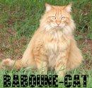 Photo de Baboune-cat