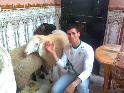le noir é mon mouton(kabche) de l'aid 2009