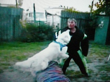 Chétane, son Brevet de chien de Défense en ring