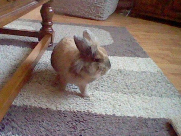 Un lapin, non ! Mon lapin !