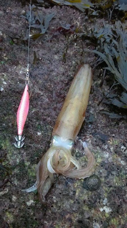 sayais les calamars sont de sorties =)