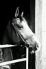 Picturehorses
