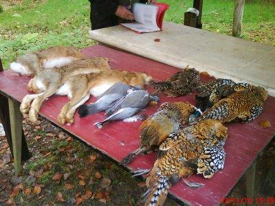 journée de chasse