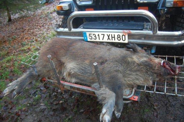 voici le sanglier il y a maintenant 2 ans tué en traque ( 63 kilo )