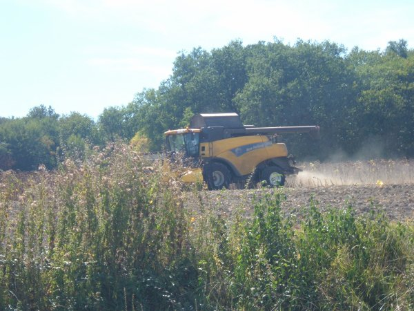 battage des tournesole avec une new holland cr980 de l'eta Tissereau