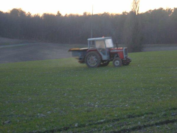 ependage d'engrais sur les blé avec un massey ferguson 275 et un épendeur Bogballe-Agram