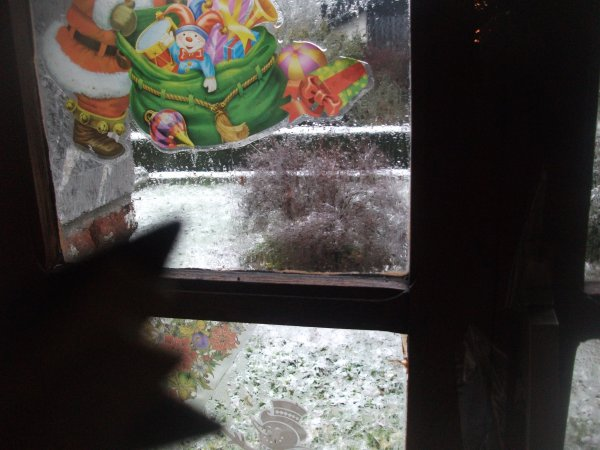bonjour de nono,et voila la neige est arrivée et sa tombe encore .