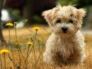 Photo de chien-4