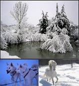 Blog de neige-animaux