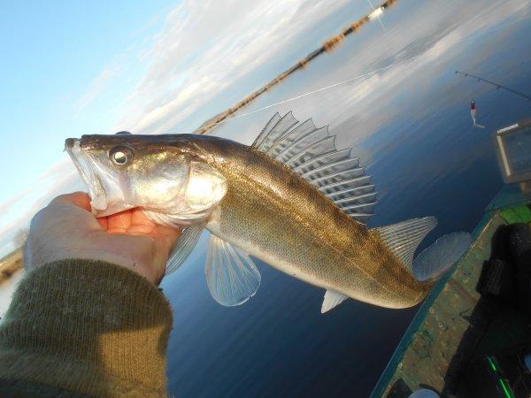 Finir une saison de pêche aux carnassiers de merde par une journée de ....