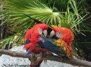 Photo de Nalo-vivent-les-oiseaux