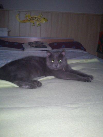 mon beau chat!!
