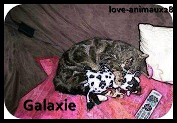 N°3                                                                 Galaxie