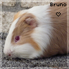 Bruno-Le-Chon