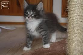 Mon futur petit chat je t'aime deja (L) =D <3