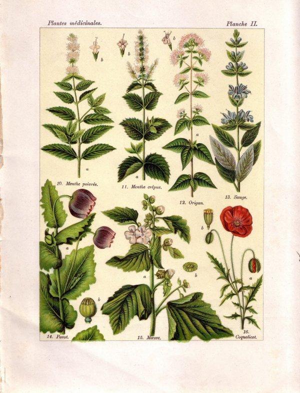 Sommaire : Plantes médicinales par noms vulgaires