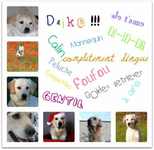 Un chien juste un =D