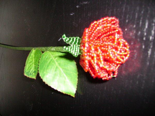 La rose rouge.