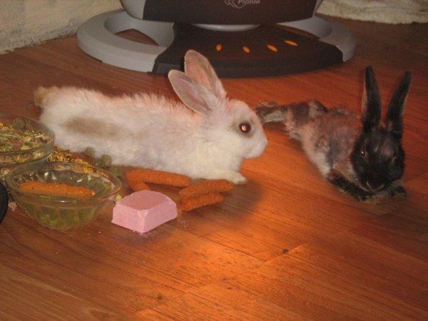 Les lapins de ma fille