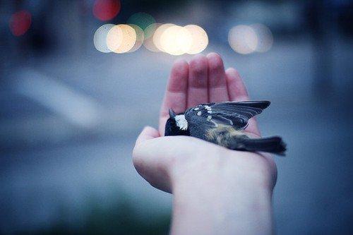 #  Tu ne m'aimais pas, non. Parce qu'on ne détruit pas la personne qu'on aime.