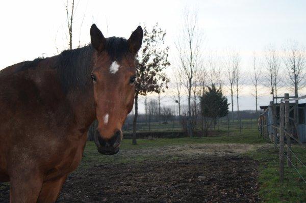 lundi 10 janvier 2011 17:23