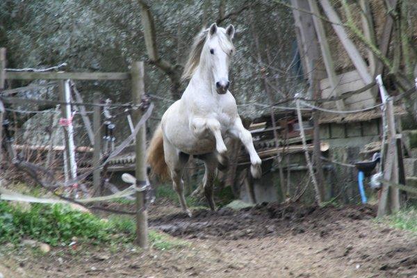 Heureusement il y a les chevaux...