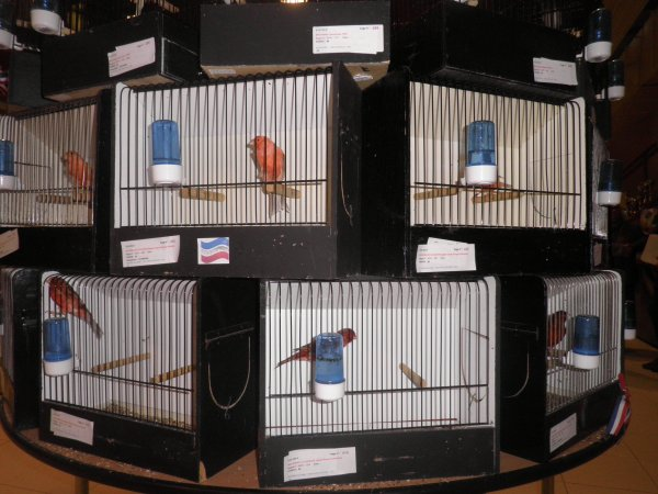 Délogement de mes oiseaux d'Anglure