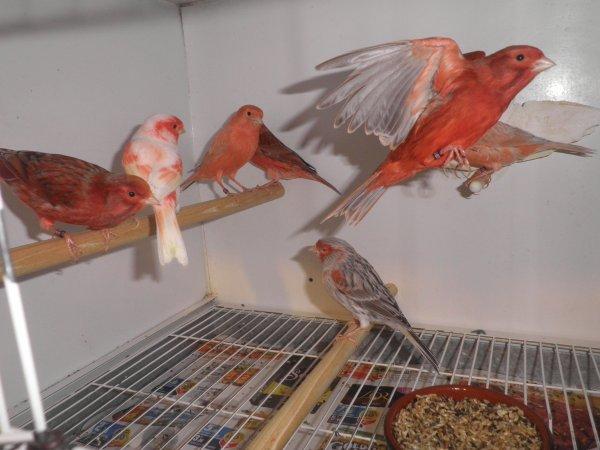 Mes oiseaux en réserve
