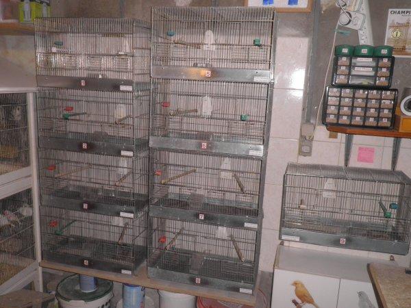 bientôt les mâles seuls en cage d'élevage