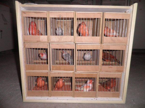 Enlogement des oiseaux a Charleville