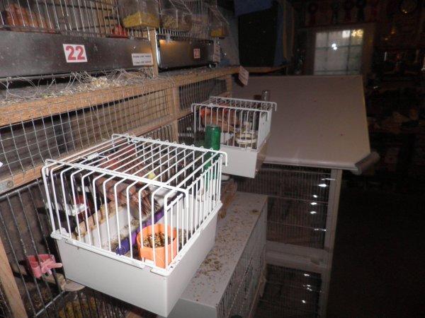 Quelques jeunes en cage baby