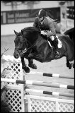 Photo de chevaux-piix