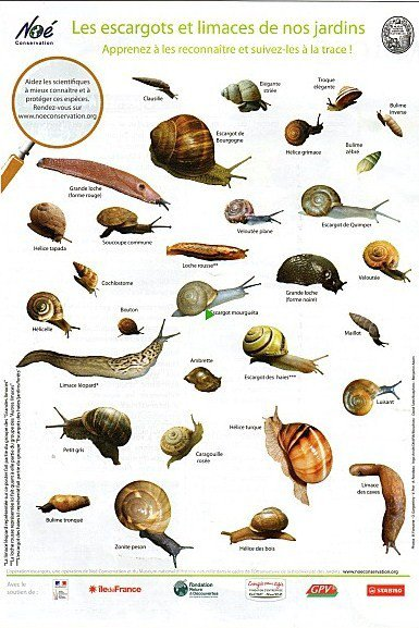 Les escargots dans nos jardins....